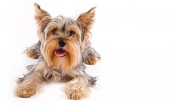testimonial dog 1
