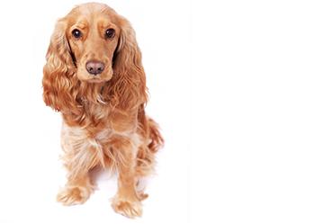 testimonial dog 3