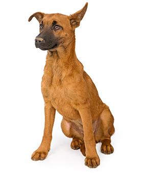 testimonial dog 2